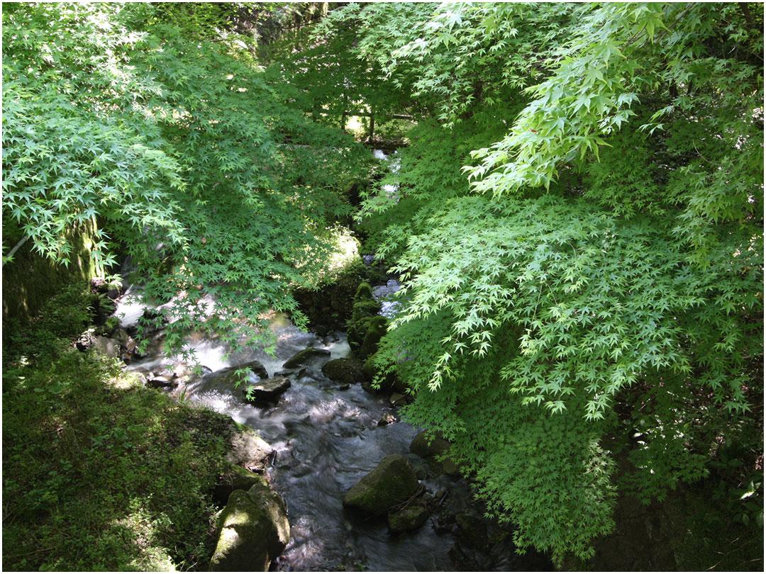 新緑の散策路(海石榴)