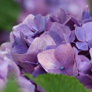 夏の香りと涼やかな懐石