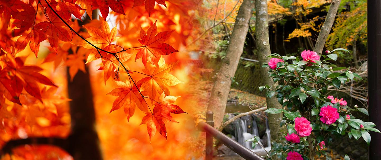 紅葉と散策路