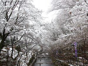 散策路の雪景色